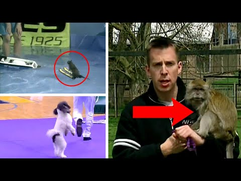 Most Unexpected Animal Interference Moments in Sports – Funny Invasions & Interruptions (New) Part 2