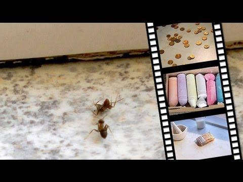 ameisen auf dem balkon bekmpfen trendy ameisen bekmpfen with ameisen auf dem balkon bekmpfen. Black Bedroom Furniture Sets. Home Design Ideas