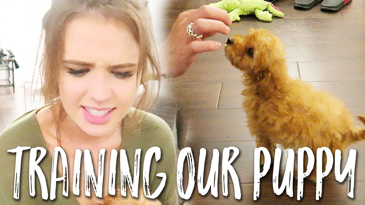 teaching-our-new-puppy-tricks
