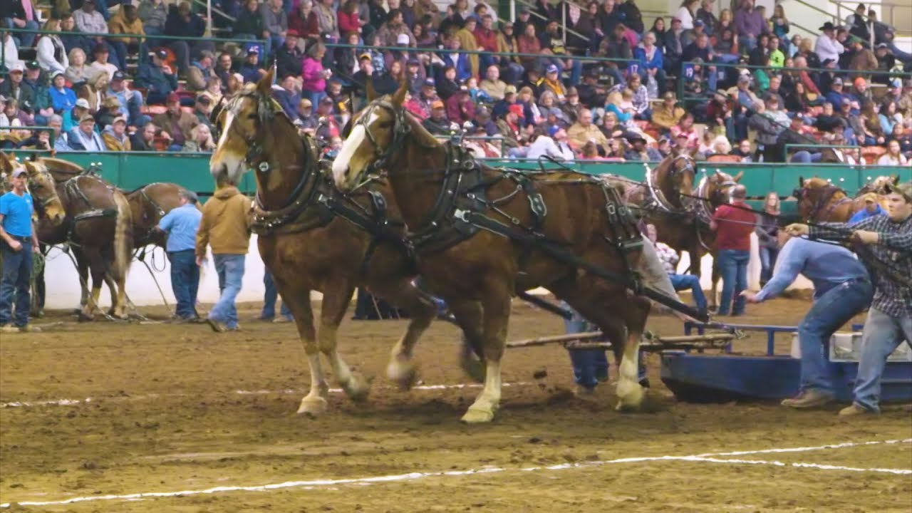 Southern National Draft Horse Pull