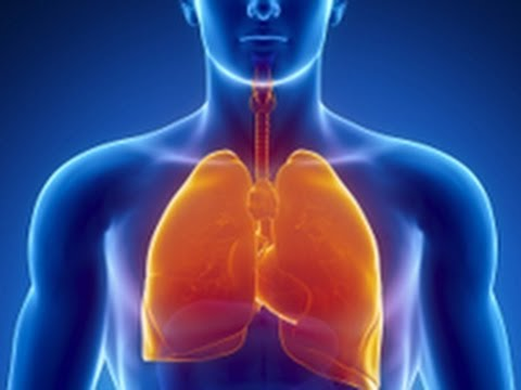 Parts of Respiratory System - Quick look