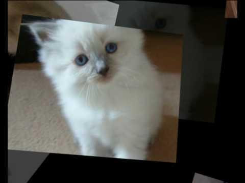 order pets online