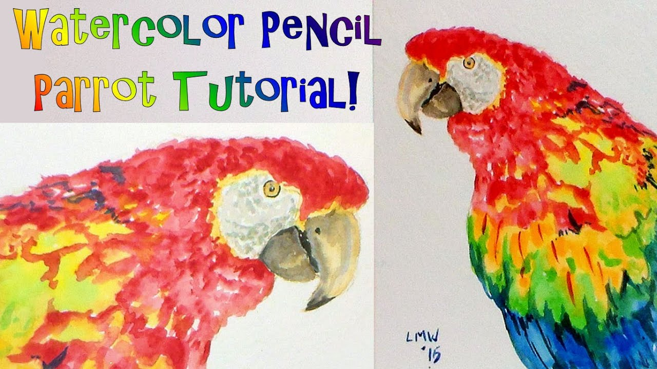 Parrot (or Macaw?) REAL TIME How to Paint and Draw Tutorial with ...