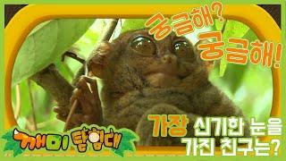 [깨미탐험대] 궁금해! 궁금해! #안경원숭이 #두더지 …