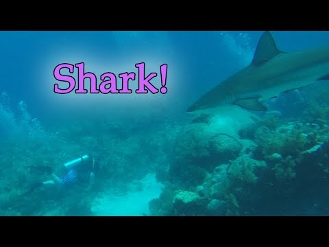 Scuba Diving With SHARKS!!!