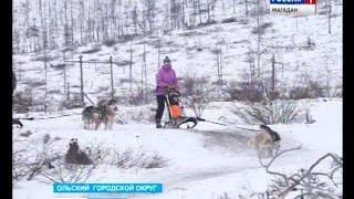 Ездовых собак профи тренируют в Магадане