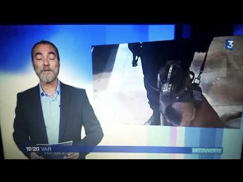 SDPM (c) : POLICE MUNICIPALE DE TOULON - Brigade Canine