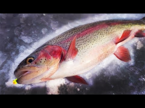Ice Fishing For TROUT! Jigging Up COLORFUL Rainbows