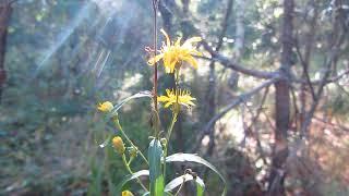 Жёлтые цветы*красота
