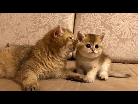 Cutest Relationship of Mom Cat and Cute Kittens