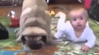 Смешное видео  Малыш и собака  Драка за печеньку