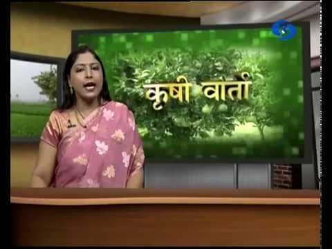 Krishivarta Bajarbhav - 29 May 2018 - कृषीवार्ता बाजारभाव