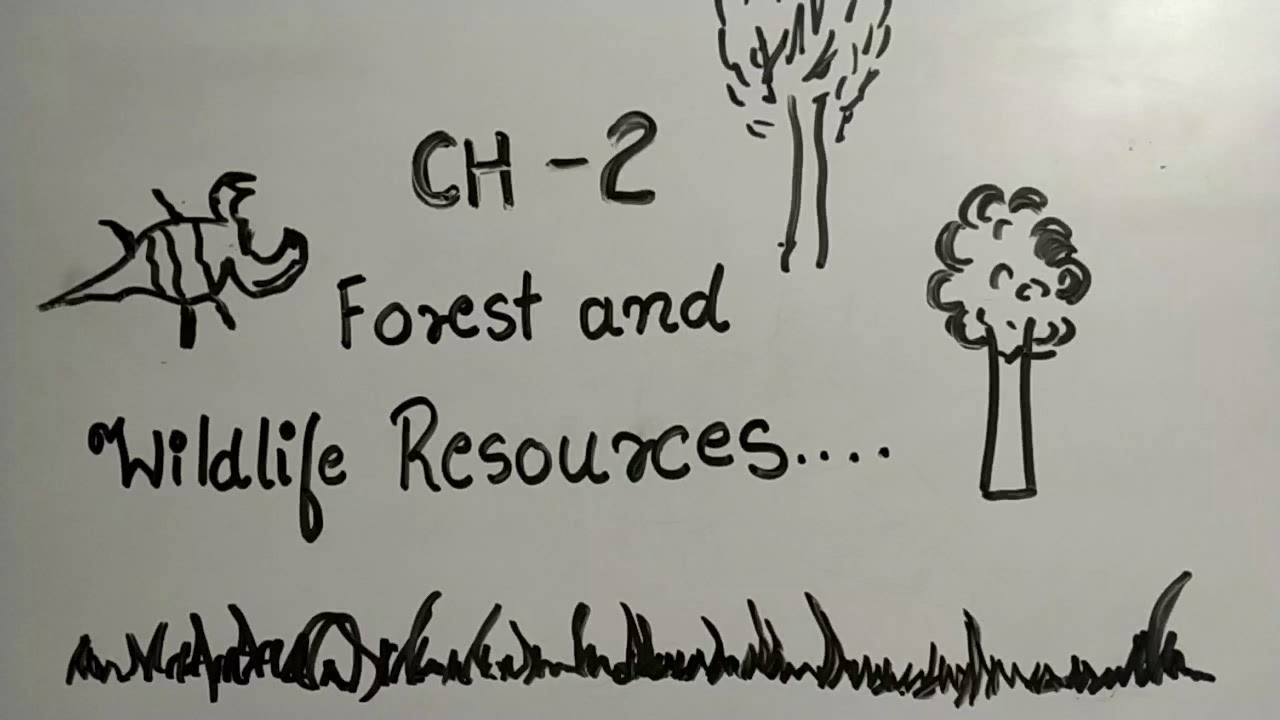 Rbse cbse 10th forest and wildlife resources # 1 is a part of the series of social science notes. Forest And Wildlife Resources Ep 02 Class 10 Explanation In Hindi Cbse Ncert Youtube