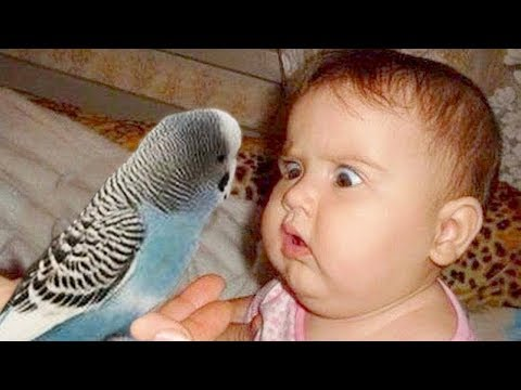 Funny Babies And Parrot Meeting ★ Cute Baby And Animals Compilation