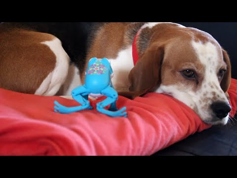 Cute dog pranked by annoying toy frog : Funny fairy tale