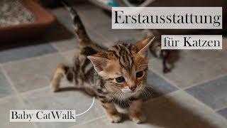 Erstausstattung für Katzen 🐱🏡 Checkliste und Tipps für die Grundausstattung | CatWalk & AmelyRose
