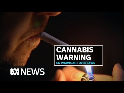 Canberra Laws Legalising Cannabis Breach International Law, United Nations Warns | ABC News