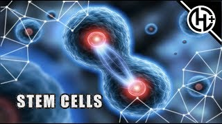 CAN WE LEARN TO REGENERATE?! : MULTIPOTENT AND PLURIPOTENT STEM CELLS