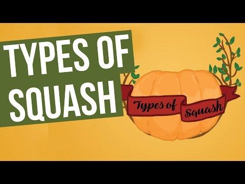 Types of Squash
