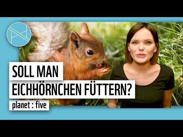 Soll man Eichhörnchen füttern? 5 Tiere, die du im Winter füttern solltest | planet : five