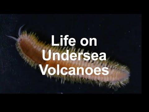 Life on Undersea Volcanoes