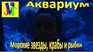 BIODOME Аквариум. Морские звезды, крабы и рыбки.(Влади представляет: https://www.youtube.com/channel/UCjm-7qX4kB9IODpgXxg393w В этом видео Влади ищет новые приключения в Биодоме...., 2016-02-11T06:34:21.000Z)