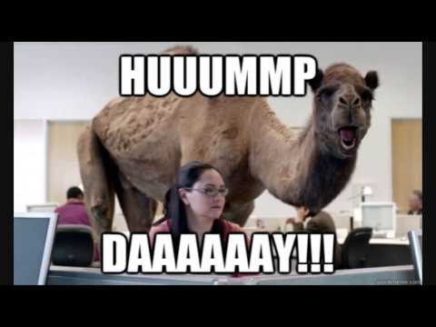 Geico Hump Day Remix Youtube