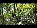 Pikat Burung Pleci Jossburung Kali Mantan  Mp3 - Mp4 Download