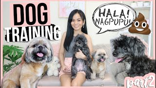 HOW TO TRAIN DOGS + GROOMING and SPAYING (Tipid Tips!)