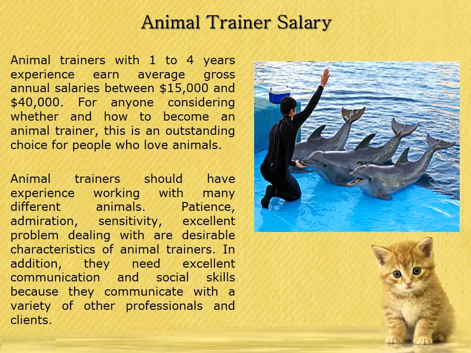 How To Become An Animal Trainer – Stephanie Taunton - YouTube