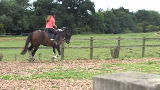 Tried Barney in draw reins to see how he would go.. LOVE HIM!