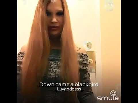 Down came a Blackbird Lilla McCann
