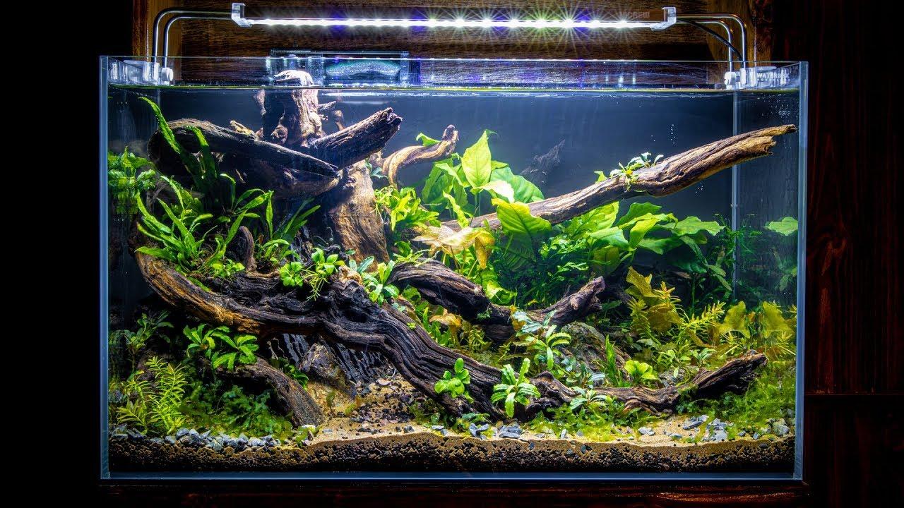 Download Building The NEW NANO FISH Aquascape (Low Tech)