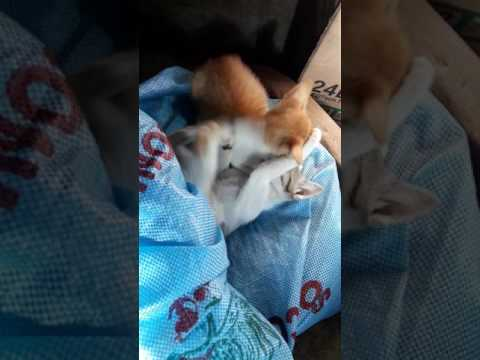 Kittens/Cats Playing Together. So Cute and Funny. Shocking Reaction From Them When They Saw Me.
