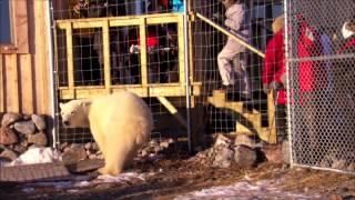 Polar Bears A Summer Odyssey 5 الملحمة الصيفية للدبب القطبية