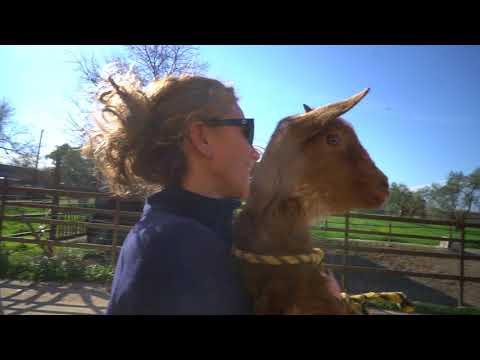tres-burros-y-un-caballo-desaparecen-de-la-finca-del-terror-de-bormujos-(sevilla)