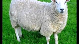 Кто живет в деревне? Знакомство с домашними животными