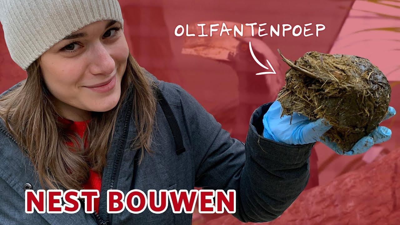 Neushoornvogels helpen met NEST BOUWEN! 🥚💩