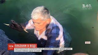 В Одесі на узбережжі відпочивальників наполохали змії