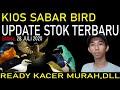 Harga Burung Kacer Cucak Ijo Beo Trucuk Jalak Putih Pleci Jatim Dll Di Kios Sabar Birds  Mp3 - Mp4 Download