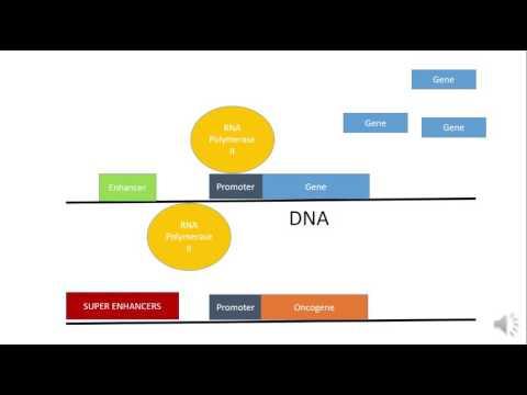 Manipulating Super Enhancers to Treat Cancer