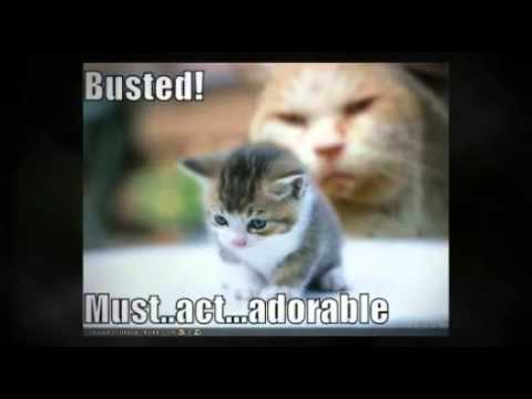 Really Funny Pictures With Words Funny Kittens |...