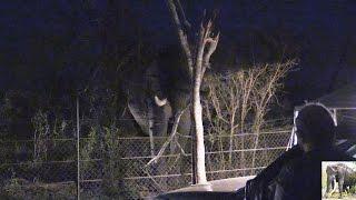 Elephant Destroys Fence At Crocodile Bridge Camp Kruger Park