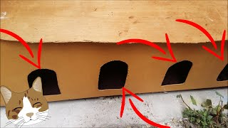 For Stray Cats And Kittens New Cat House