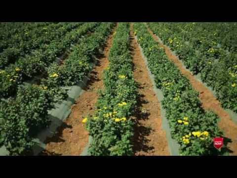 Flower farm in Bangalore