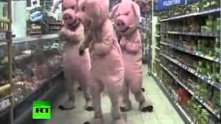 Piggy power dances into food war