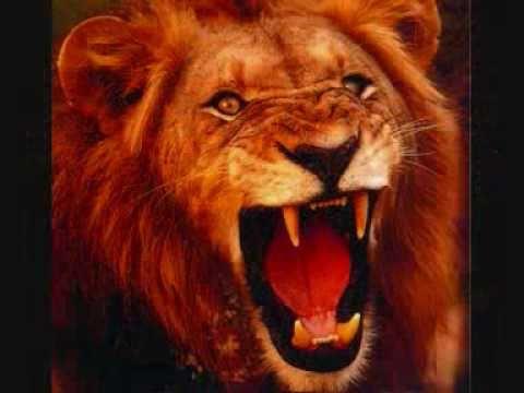 Haile Omega - Lion time