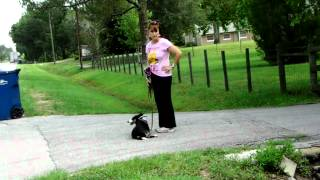Molly The Collie Vs Barking Dog Dogtra Pager E Collar