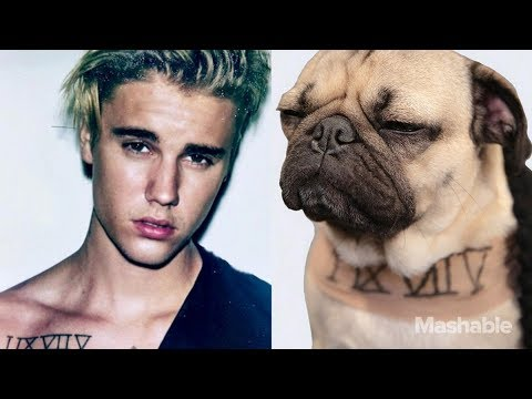 The DOG Version of JUSTIN BIEBER'S New Song DESPACITO (ᵔᴥᵔ)