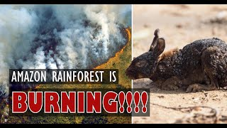 #PrayForTheAmazon 475 thousand hectares have been burned in the Amazon in Brazil
